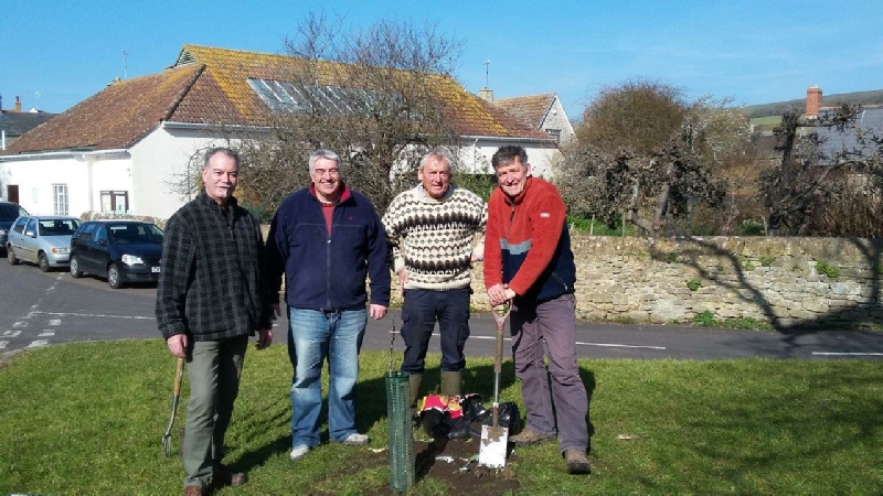 Walnut tree planted on Village Green